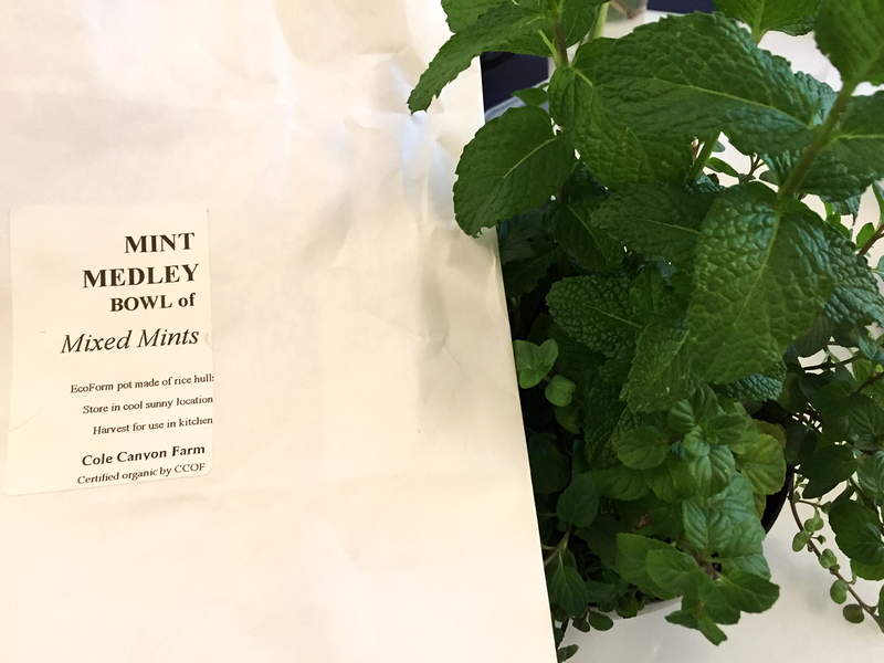 Growing Instructions for Mint